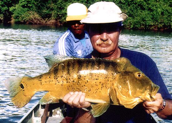 Rio Xingu   The Peacoc...