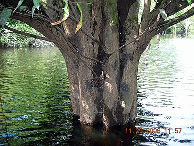 Blackwater Environment